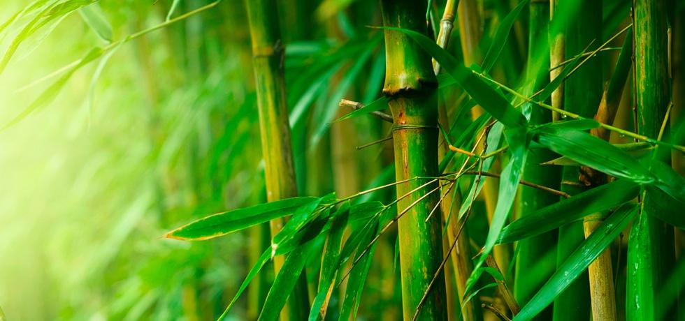 Erborian linea bambù